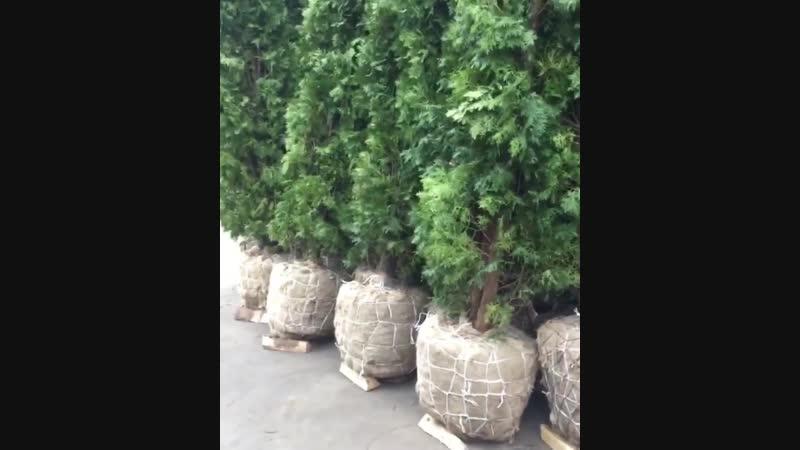 Обращаем внимание на корневую систему-Школа цветоводства и садоводства