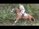 клип про лошадей-счастье