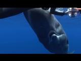 شاهد كيف فتح حوت العنبر الضخم فمه امام المصور - Sperm whale (1).mp4