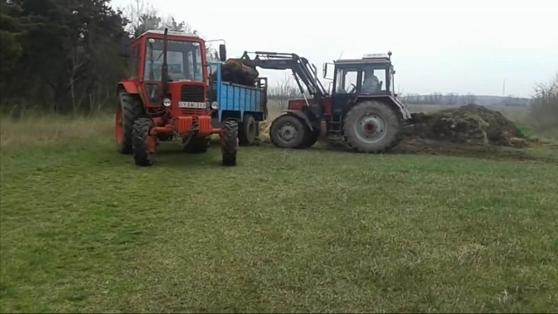 Погрузка и вывоз удобрения тракторами Беларус 952.2 и МТЗ 82