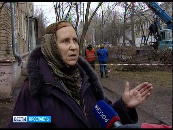 Жители Ярославля пожаловались на вырубку деревьев