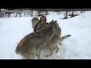 Копия видео Девушка вырастила волчат и отпустила их на свободу Это встреча через 4 года