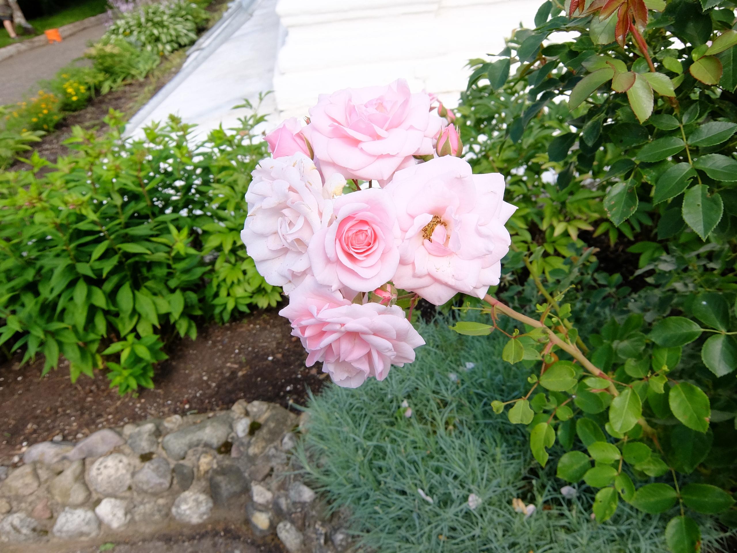 Цветы возле церкви