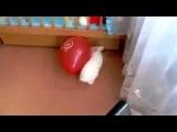 Кролик и воздушный шарик!!))