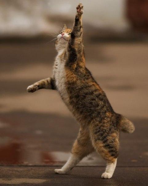 حد يدخل يعرفلنا حكاية القطة دي إيه !!