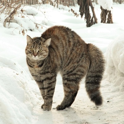 Елена Хохлова, 16 января , Западная Двина, id136242130