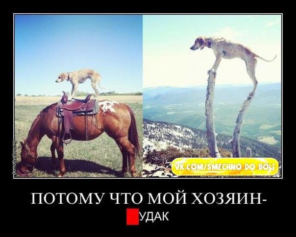 самые смешные картинки: