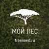 Мой Лес | Семена деревьев
