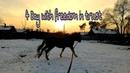 4 дня с freedom in trus Виртуальная корда 4 Day with freedom in trust