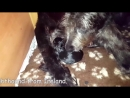 Giving birth process of 5 big dog in the world
