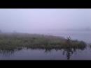 Река Сясь Ленинградская область впадает в Ладогу