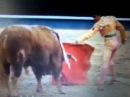 Коррида в Испании - Бои быков - Spanish corrida, bull fights
