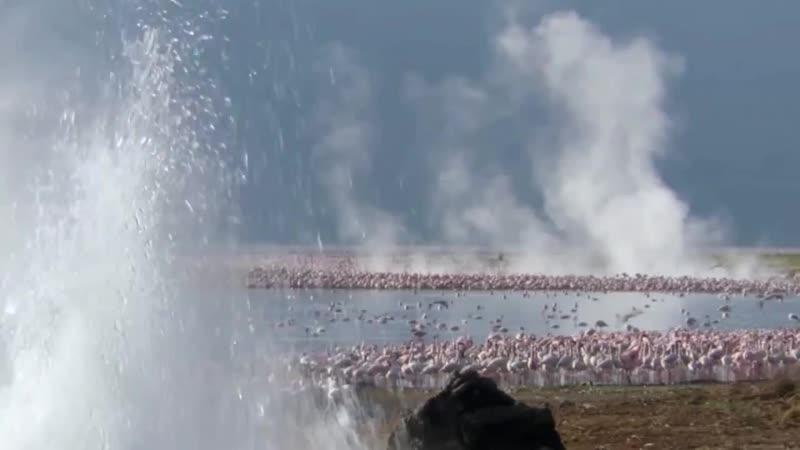 Розовый фламинго - дитя заката