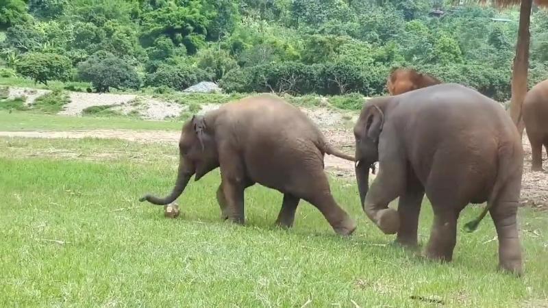 Слоники пинают мяч