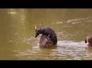 Дикая природа Тайланда Часть 1 Документальный фильм Nationaln Geographic