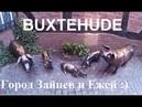1 Buxtehude Город Зайцев и Ежей : ) Букстехуде Германия Deutschland
