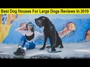 Top 3 Best Dog Houses For Large Dogs Reviews In 2019