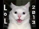 Самые смешные приколы с животными 2013