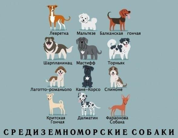 Фото №386562743 со страницы Натальи Ветлугаевой
