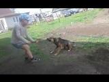 собака злая )))только с ним...