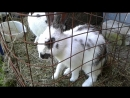 Кролички умываются