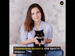Девушка более 10 лет помогает бездомным кошкам находить дом