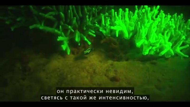 Светящиеся в темноте акулы и другие удивительные обитатели моря