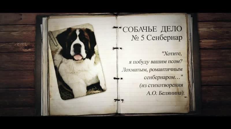Собачье дело №5