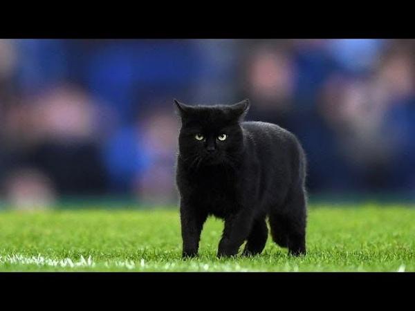 Black cat on football pitch Everton vs Wolves