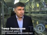 В Тверской области производят зверьков Шиншиллы