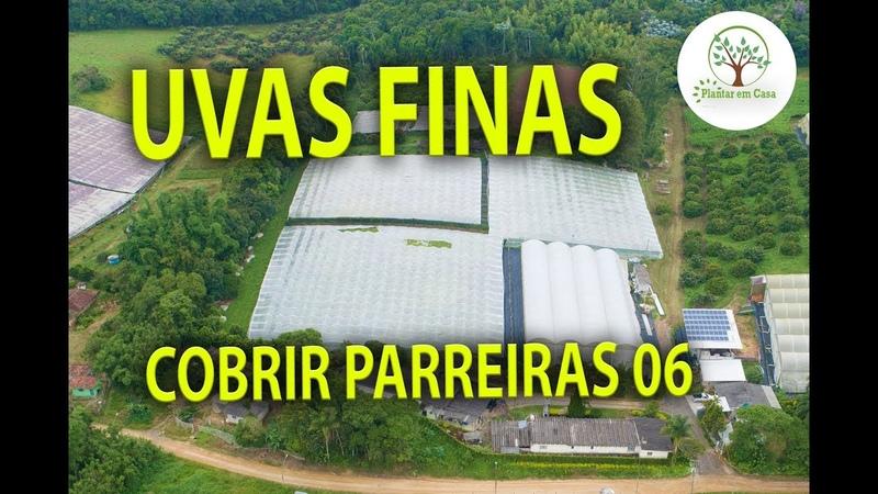 UVAS FINAS, IMPORTÂNCIA DA COBERTURA, 06 Plantar em Casa