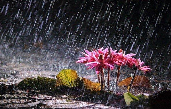 Картинки по запросу Если в Вашей жизни пошел дождь, сосредоточьтесь на цветах, которые зацветут благодаря этому дождю.   Радханатх Свами.