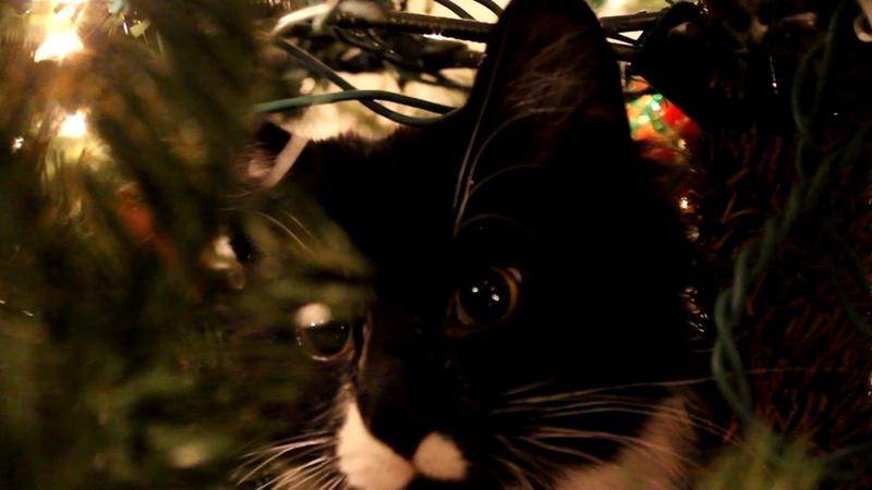 Kitten destroys Christmas tree