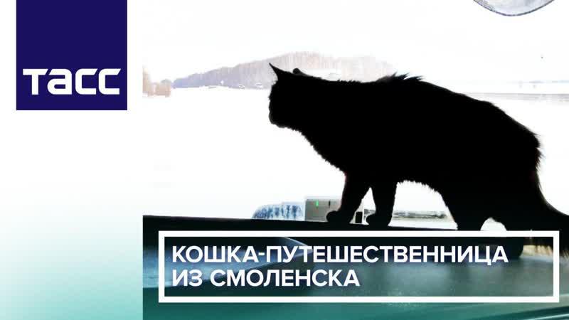 Кошка путешественница из Смоленска