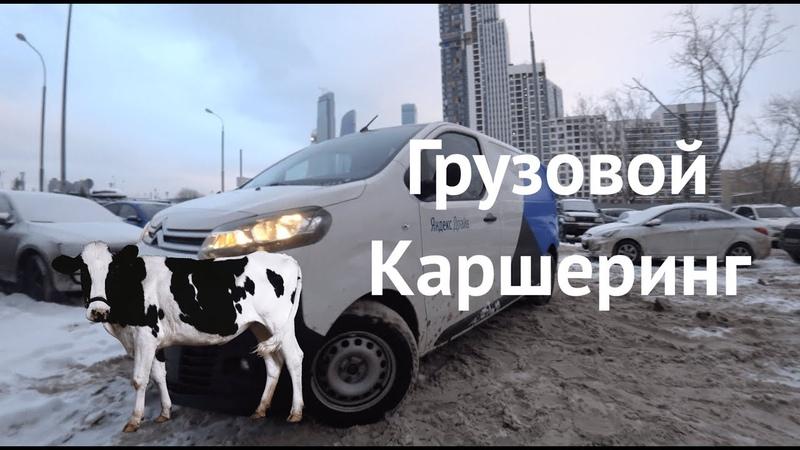 🐄🚚🎅Можно ли перевезти корову в Яндекс.Драйве на Citroen Jumpy Грузошеринг в Москве
