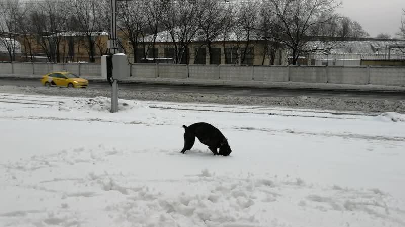 На снегу с мячиком