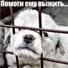 Приют для бездомных собак САО г.Москвы в Куркино