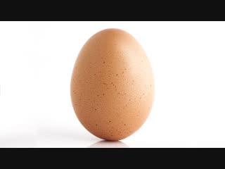 World_record_egg (feat папич)