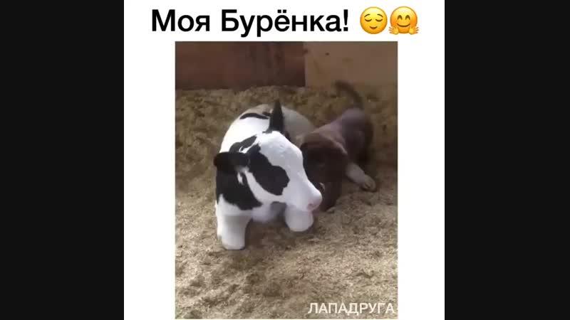 Время для завтрака, а ну-ка давай молока 😏