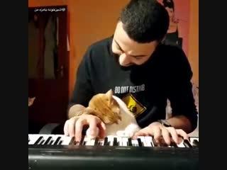 Кот балдеет от того как красиво играет хозяин на пианино.
