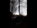 спил деревьев. арбористика 2018 Омск