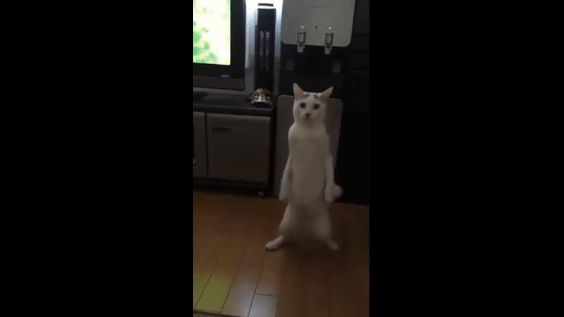 Kot.mp4