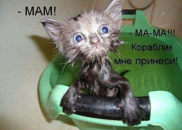 http://cs411322.vk.me/v411322202/5c72/y7U3vNo5LNQ.jpg