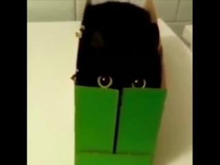 Когда картонная коробка лучшая игрушка..