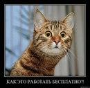 Юлия Кочергина фото #28
