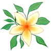 Интернет-магазин Солнечный - растения для сада