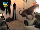 Відео приколи про тварин за 14 травня 2014 року.