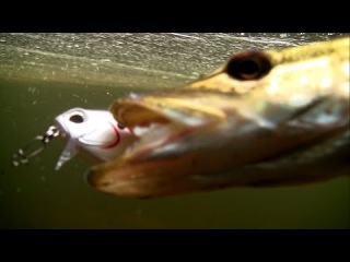 Fishing: my best / top 10 DUO lures /swimbaits in action underwater / bass pike perch zander seabass
