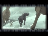 Wolfs Rain Animash | Shattered