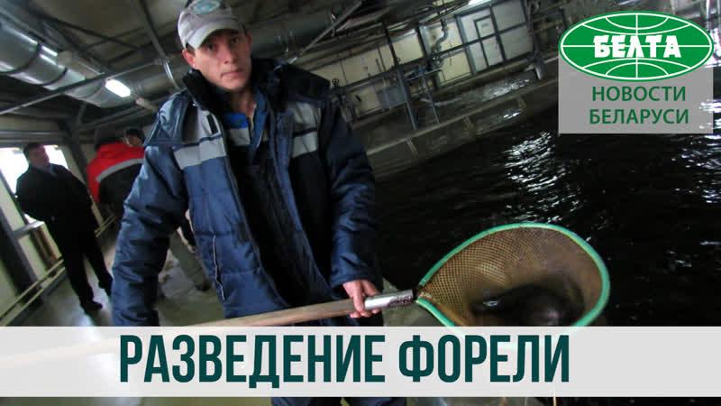 Рыба премиум-класса и даже икра - отечественного производства